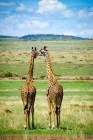 safari-9392 - Faire un safari comme Barack Obama - kenya, destinations, afrique
