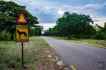 affiche lycaons - parc national de hwange - Zimbabwe, les chutes Victoria et plus encore! - afrique, zimbabwe