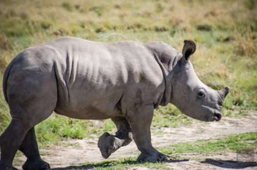 bebe rhinoceros - Sanctuaire de rhinoceros de Khama - Botswana… La nature a l etat pur! - afrique, botswana