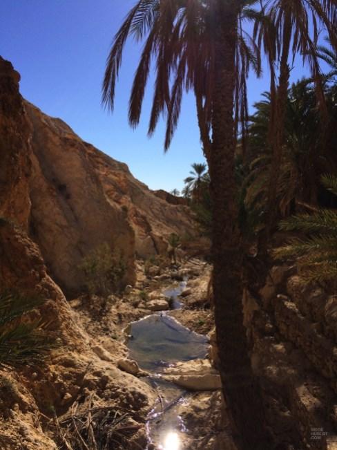 oasis palmier ruisseau