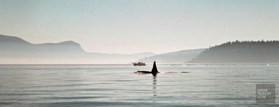 baleine - Colombie-Britannique - Le Canada dans ma langue - Amérique du Nord, Canada