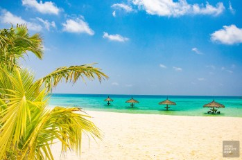 palmier ocean plage - Les Maldives - Les Maldives, le grand luxe en plein ocean Indien. - Asie, Maldives