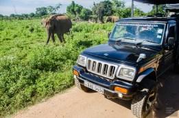 jeep elephant - Elephants, crocodiles et paons - Sri Lanka, au cœur de l ile - Asie, Sri Lanka