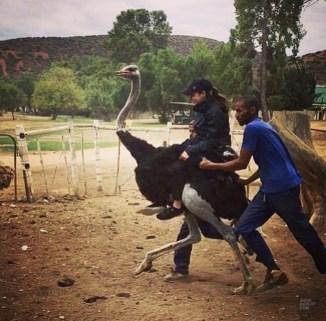 equitation autruche - A dos d'autruche - Dose d'adrénaline en Afrique du Sud - Afrique, Afrique du Sud