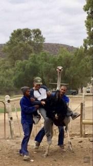 tomber autruche - A dos d'autruche - Dose d'adrénaline en Afrique du Sud - Afrique, Afrique du Sud