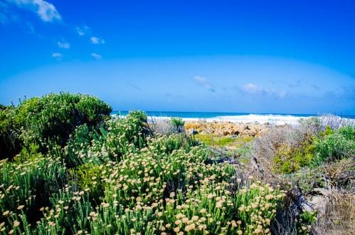 vegetation bord de mer - Ocean Atlantique vs Ocean Indien - Dose d adrenaline en Afrique du Sud - Afrique, Afrique du Sud