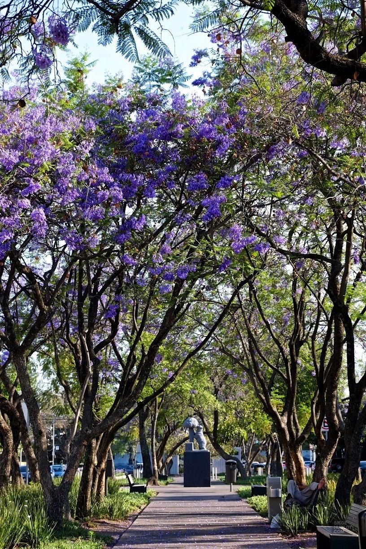 Avenue Chapultepec - Zona Chapultepec - Tout ça à Guadalajara - Destination, Amérique du Nord, Mexique