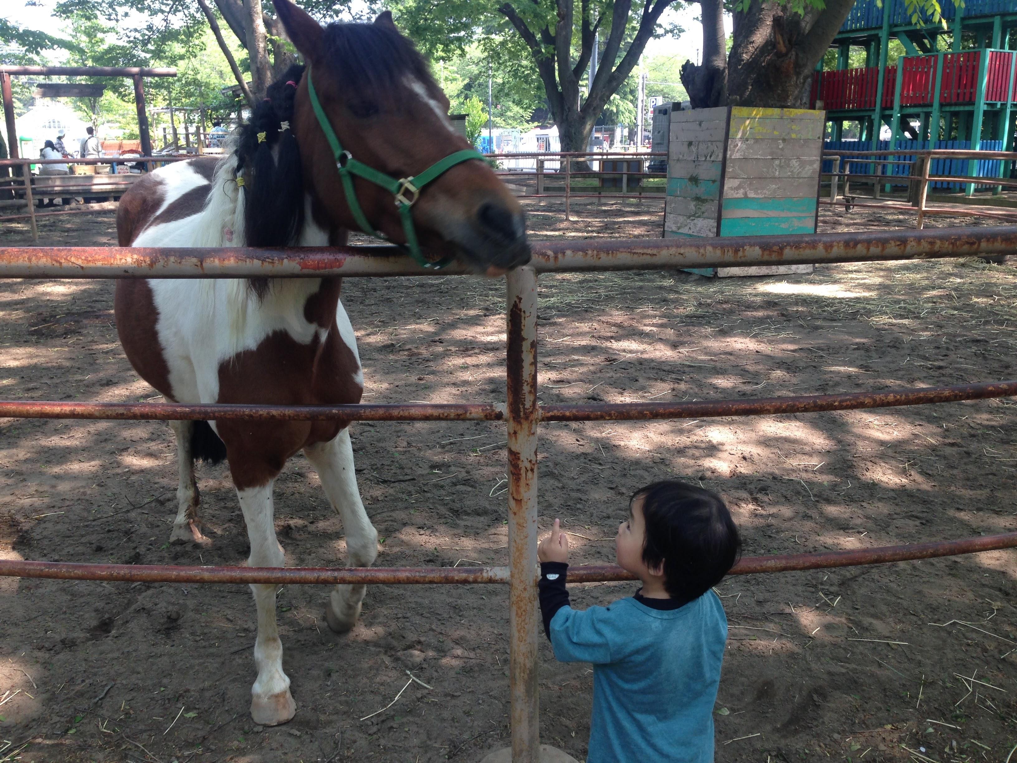 小さな子連れで清水公園に行くならポニー牧場がオススメ!