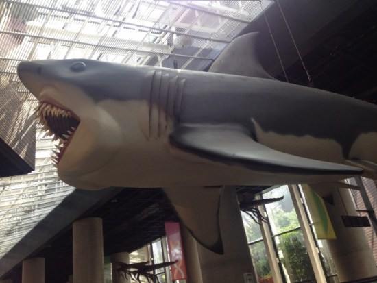 巨大な魚の展示