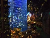 イクスピアリ内のレインフォレストカフェが楽しい!ジャングルでの食事に子供が大喜び