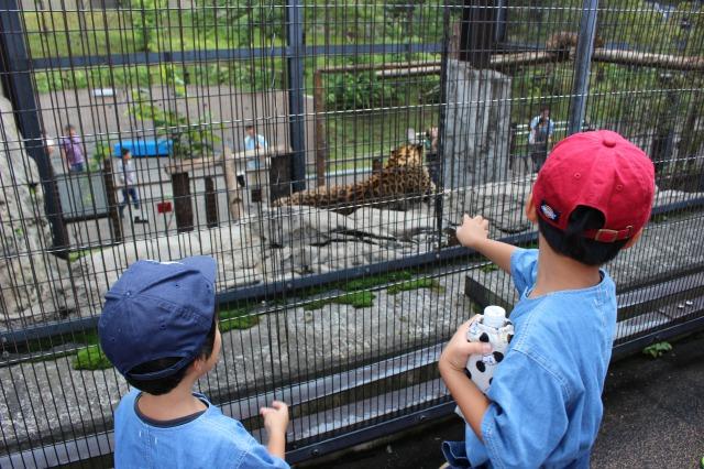 旭山動物園はやっぱり楽しい!子供が本当に楽しそうな反応するので行ってみるべき