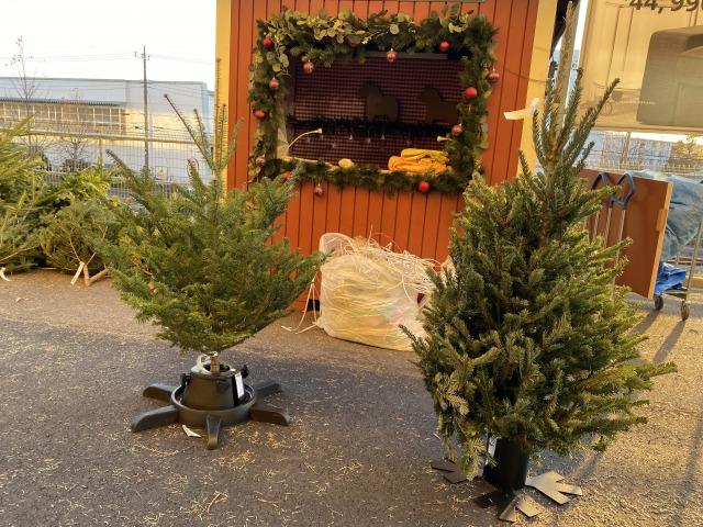 【2019年】IKEAの本物のモミの木購入。発売当日(11月21日)でも意外と空いている