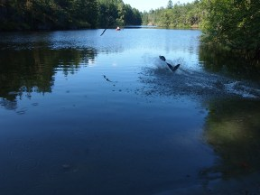 Thetis Lake, August 2014