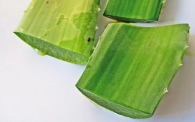 Aloe vera: Mascarillas de sábila caseras
