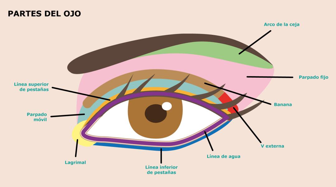 Consejos de maquillaje que todo principiante debería saber - partes del ojo