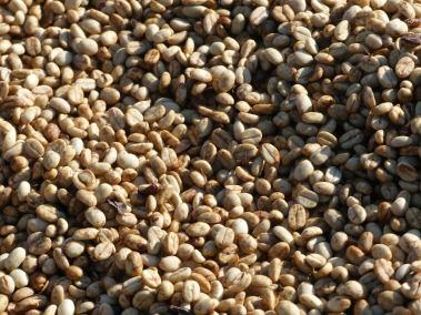 Photo of Burundi Dried Beans