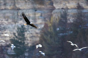Starved_Rock_Eagle_Cliffs