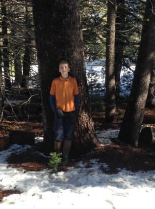 World's Tallest Lodgepole Pine