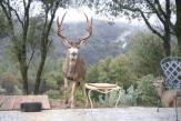 2006-1_deer