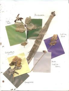 Live Oak leaves, Ponderosa pine needles, Lupine stem and flower, Ceanothus integerrimus, Deer Brush, leaf and flower