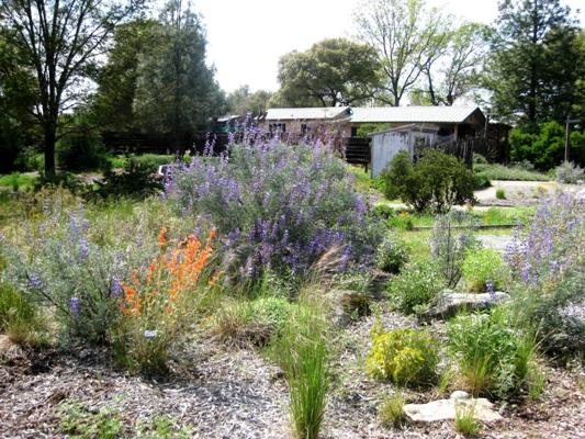 Demonstration CA native garden