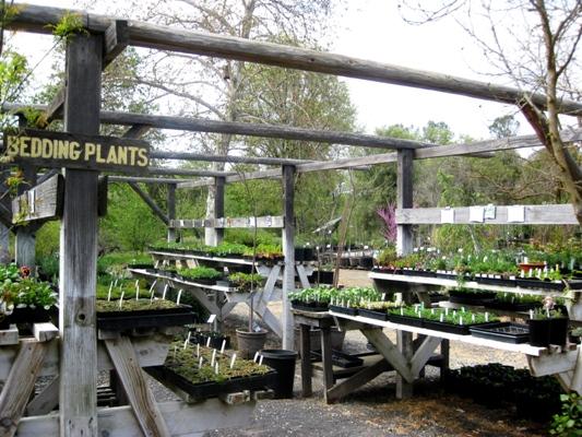 Intermountain Nursery's smaller plants for sale