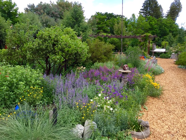 Lavender colored Agastashe at Kate Frey Sustainable Gardens
