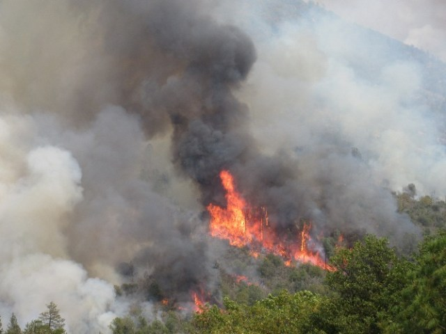 2015-8-1 3pm Flames hit some dry trees