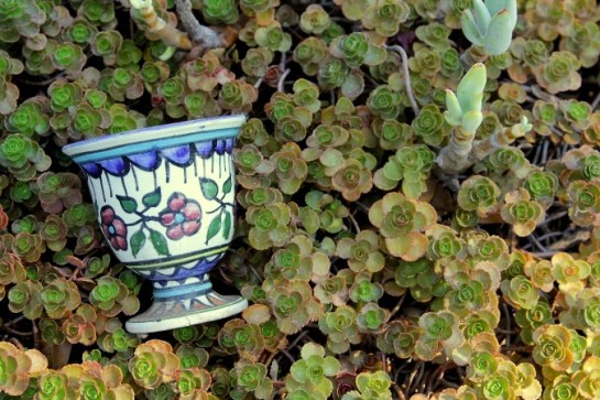 Cup in sedum wheelbarrow
