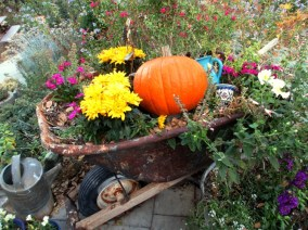 Chrysanthemums and pumpkins,...good combo!
