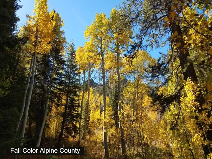 Fall color alpine County 2016