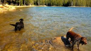 dogs at twin lakes alpine co