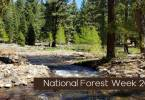 National forest Week Banner