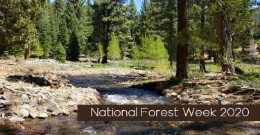 National forest Week Banner