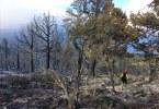 Slink fire img Doug Lawton/BLM