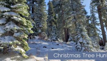 Plumas National Forest Christmas Tree Permits 2020 Christmas Tree Hunting in The Sierra Mountains – Sierra REC Magazine