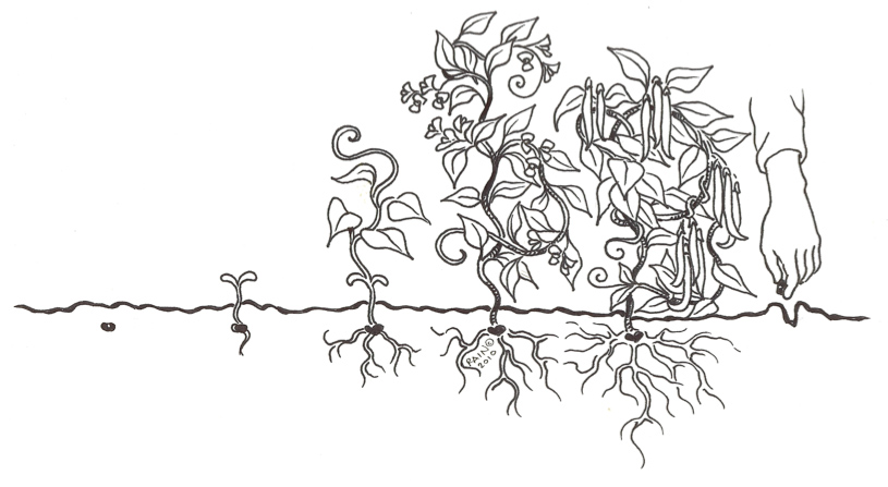 Seed Growing Coloring Page Coloring Coloring Pages
