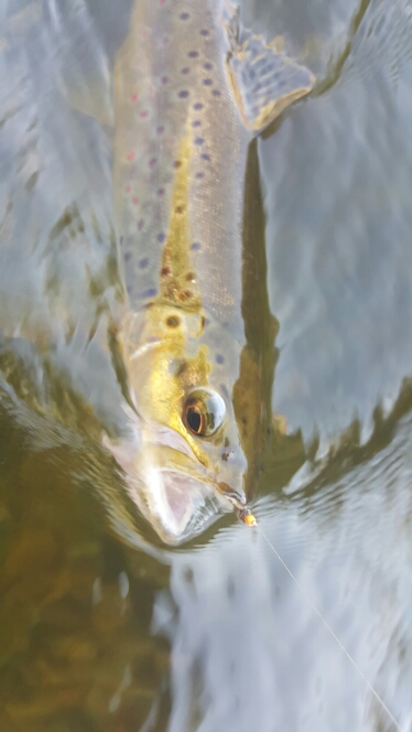 Owens River Fly Fishing