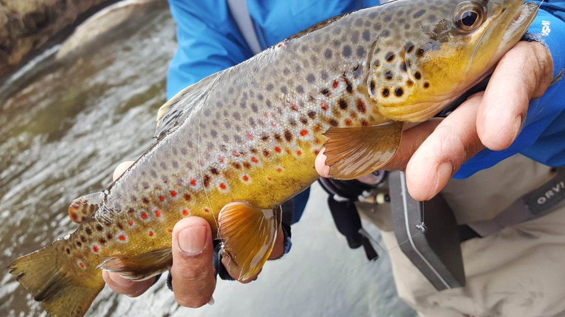 Fly fishing the Lower Owens River