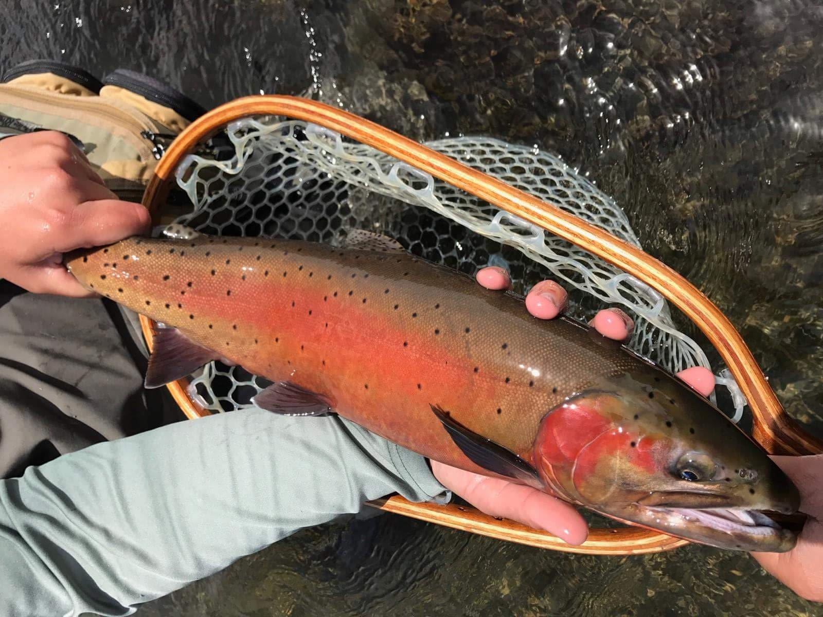 Fly fishing guide bishop and mammoth sierra trout magnet for Bishop ca fishing