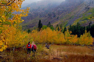 Lundy  Canyon Trail.  Photo by Alicia Vennos