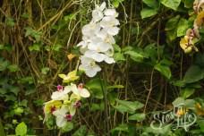 Лоро-парк: белая орхидея