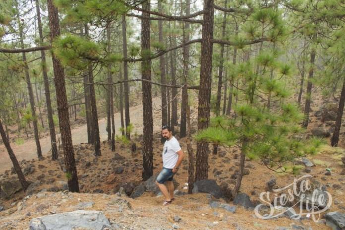 Решили побродть по канарскому лесу