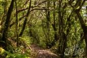 Анага: пеший маршрут по тропинке в реликтовом лесу