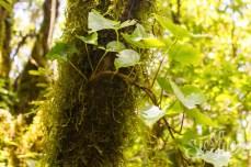 Растительность в реликтовом лесу Анаги