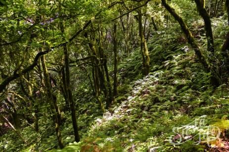 Анага: солнечный свет пробивается сквозь деревья