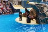 Танец с морским котиком в Лоро-Парке