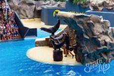 морские котики в Лоро-парке