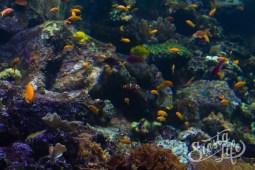 Лоро-парк: аквариум с маленькими рыбками