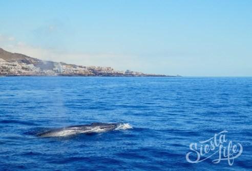 Flipper Uno: можно увидеть китов и дельфинов